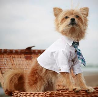 dog white club shirt