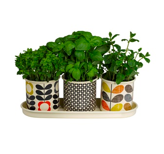 Orla Kiely Garden Accessories