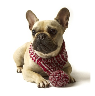 dog scarf by Mutts & Hounds