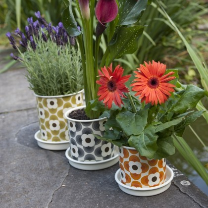 Put a Spring in your Step with Orla Kiely